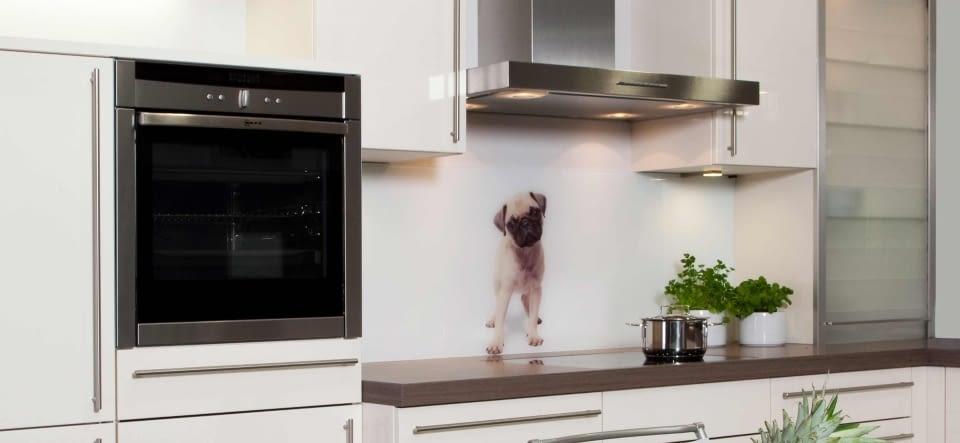 Glasrückwand Mit Hundemotiv